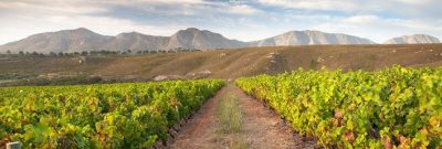 Bouchard Finlayson's Latest Vintages Get The Nod from Jamessuckling.com
