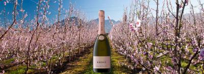 Celebrate the Arrival of Spring with Krone Vintage RoséCuvée Brut 2018 #PR