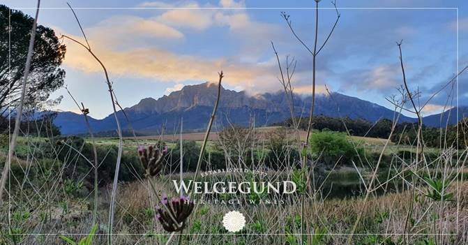 Unveiling the 2019 Vintages of Welgegund Heritage Wines #PR